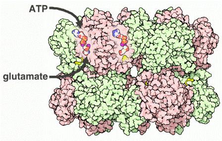 1fpy-ligands